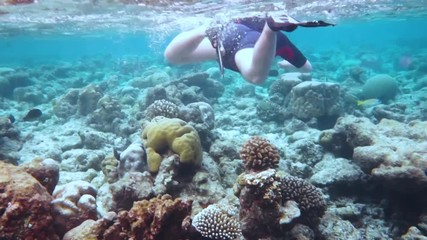 Wall Mural - Snorkeler Coral reef in the Maldives