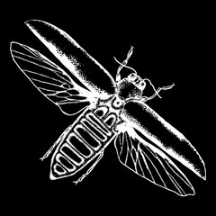 Flying insect, bug with wings, scarab beetle. Vintage old hand drawn stippling and hatching, shading style. Engraved stipple woodcut. Vector.