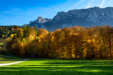 Wall Mural - Autumn mountain landscape with fall forest and mountain range in the background. Austria, Tirol, Tyrol