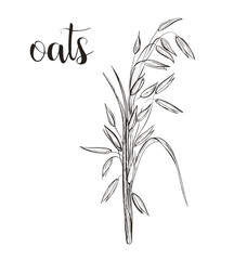 Oats sketch hand drawing. Vector illustration.