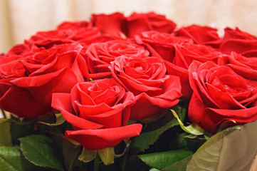 Red roses . Close-up, selective focus.