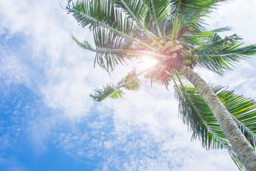 coconut tree and cloud in sky blue