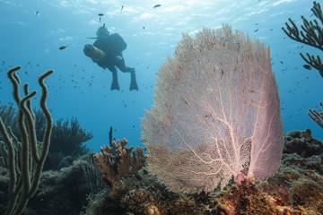 Unterwasser - Riff - Seefächer - Gorgonie - Taucher - Tauchen - Curacao - Karibik