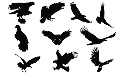 Bald eagle Silhouette vector illustration