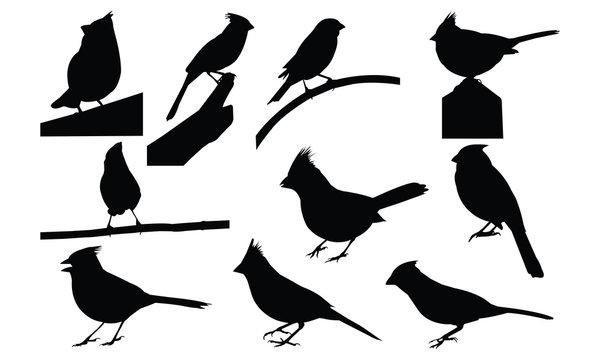 Cardinal Silhouette vector illustration