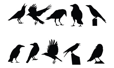 Crow Silhouette vector illustration