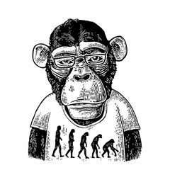Monkeys in a T-shirt with the theory of evolution on the contrary.