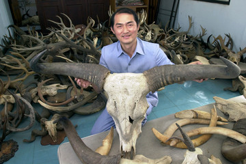 PRASERD SRIYANYONG SHOWS A RARE RED COW'S HORN IN BANGKOK.
