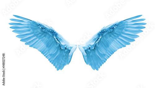 Wall mural Internal white wing plumage