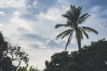Palm tree at sunset, Santa Fe de Antioquia, Colombia