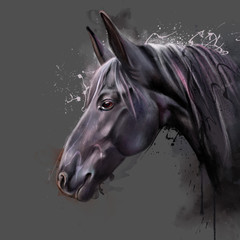 Portrait of a horse on black background. Domestic horse, an animal of the equine equines squad, domesticated and the only surviving subspecies of wild horse (Equus ferus), extinct in the wild
