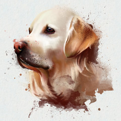 portrait of a Labrador, watercolor illustration