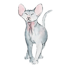 watercolor illustration of cat sphinx on white