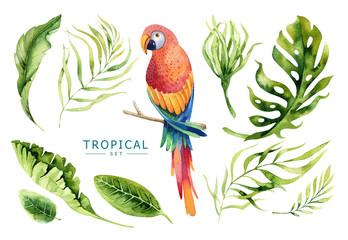 Hand drawn watercolor tropical plants set and  parrot. Exotic pa