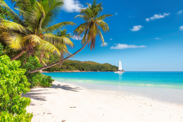 Sandy beach with palm trees and a sailing boat in the turquoise sea on Paradise island. Wall mural