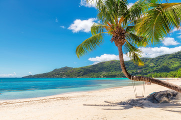 Famous Beau Vallon beach with coconut palm tree on Mahe island, Seychelles.