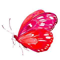 beautiful red butterfly,watercolor,isolated on a white