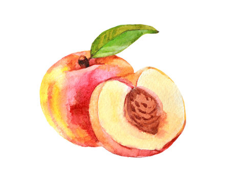 Peach fruit with leaf, watercolor illustration