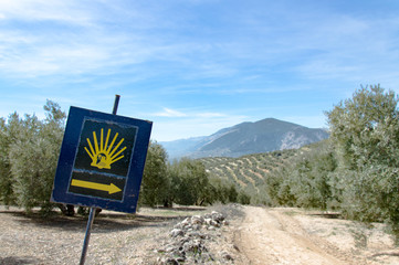 Sign of St. James Way in front of olive tree plantation during springtime, in front of Sierra Nevada, Andalusia, Spain