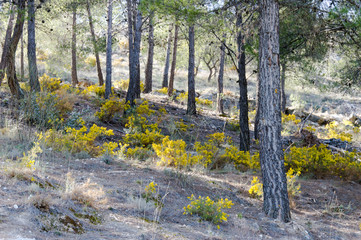 Blooming and petals in the forest on a day in spring, captured in Andalusia, Spain
