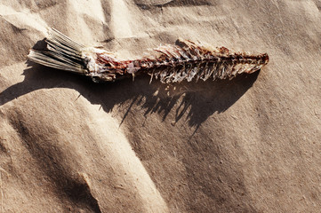 Bone from fish. Eaten-around bone from dry salty fish on paper