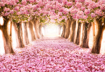 Falling petal over the romantic tunnel of pink flower trees / Romantic Blossom tree over nature background in Spring season / flowers Background Fototapete