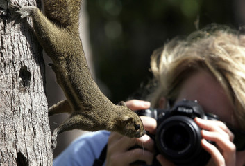 Swiss tourist takes a picture of a squirrel during her holiday on Bali