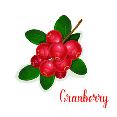 Cranberry fruit bunch with green leaf cartoon icon