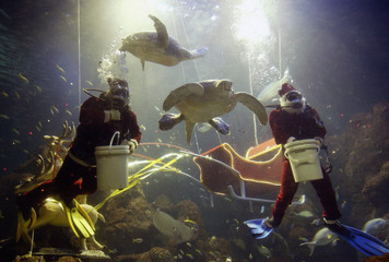 Divers dressed as Santa Claus feed turtles in a fish tank at Jakarta's Sea World aquarium