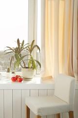 Windowsill with beautiful home plants