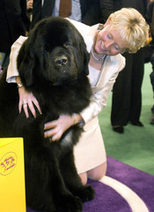 JOSH A NEWFOUNDLAND WINS THE BEST IN SHOW AT WESTMINSTER DOG SHOW.