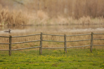 A countryside scene of a fence and a duck swimming in a pond.