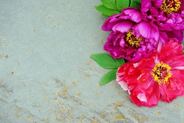 Bright pink tree peony flowers in bloom framing a grey stone background