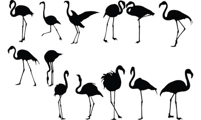 Flamingo Silhouette vector illustration