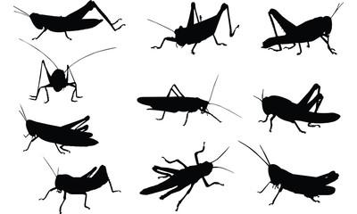Grasshopper Silhouette vector illustration
