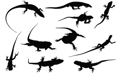Iguana Silhouette vector illustration