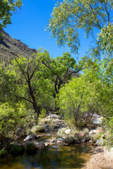 Deciduous trees along Sabino Creek in Sabino Canyon, near Tucson, Arizona