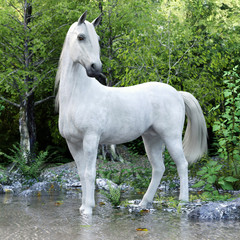 White stallion horse posing with a lake and woods background. 3d rendering