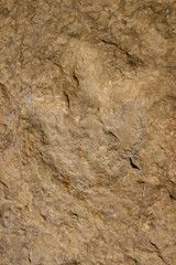 A footprint of a Sauropod, the largest land animal in earth's history, is seen near Madar village