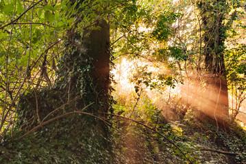 Garden Poster Forest Sonnenstrahlen im Wald