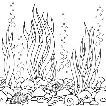 Hand drawn vector seaweed, seashells, stones. Beautiful hand drawn Aquarium. Black and white drawing by hand. Line art.