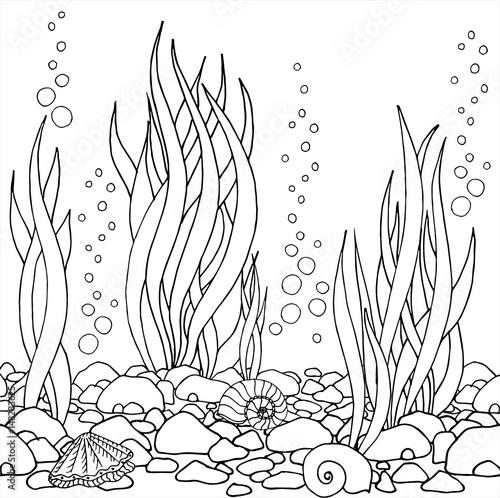 Line Drawing Kelp : Quot hand drawn vector seaweed seashells stones beautiful