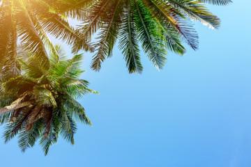 Palm tree on sky background