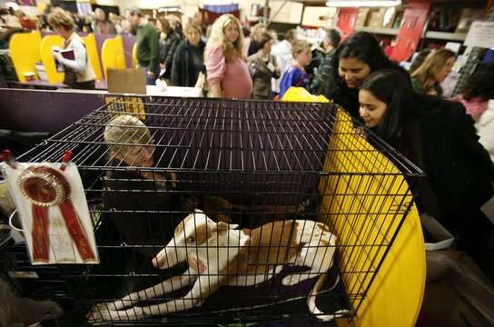 A young girl sits in a cage with her Ibizan Hound after the dog won Best Opposite Sex in his breed at the 131st Westminster Kennel Club Dog Show at Madison Square Garden in New York