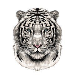 the head of the white tiger full face symmetrical, sketch vector graphics color picture