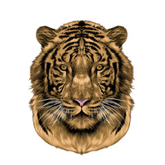 tiger head full face symmetrical, sketch vector graphics color picture