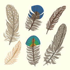 Set illustration with feathers. Isolated objects. Freehand drawing
