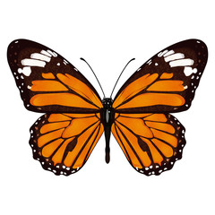 Butterfly with orange wings, view from above, isolated on white background. Vector illustration, banner, card, poster