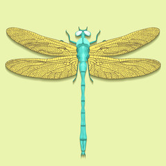 Dragonfly blue with yellow wings, view from above, isolated on light green background