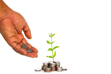 A tree growing from pile of coins on white background. / CSR and green business / business ethics""